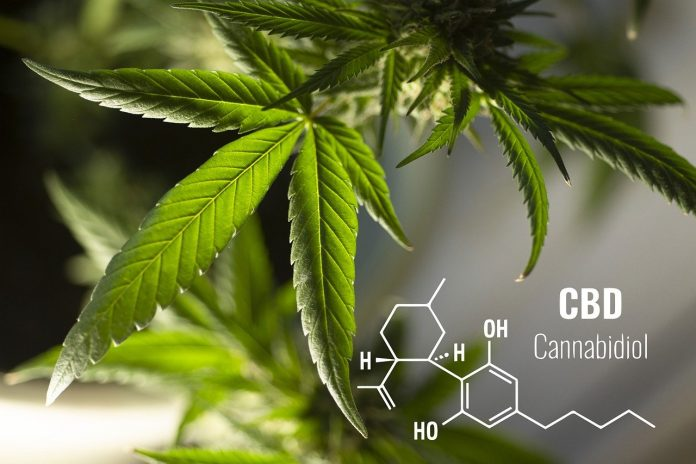 Basics of CBD